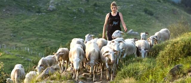 pastore-femminile-plurale