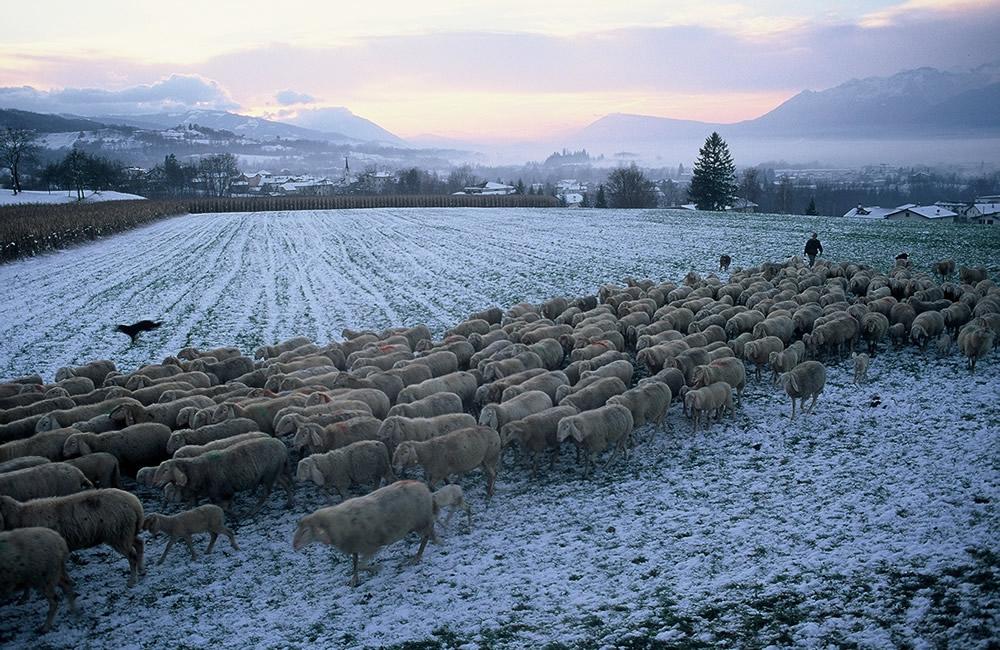 pastori e guide